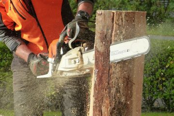 Cutting Edge: A Chainsaw Buyers Guide