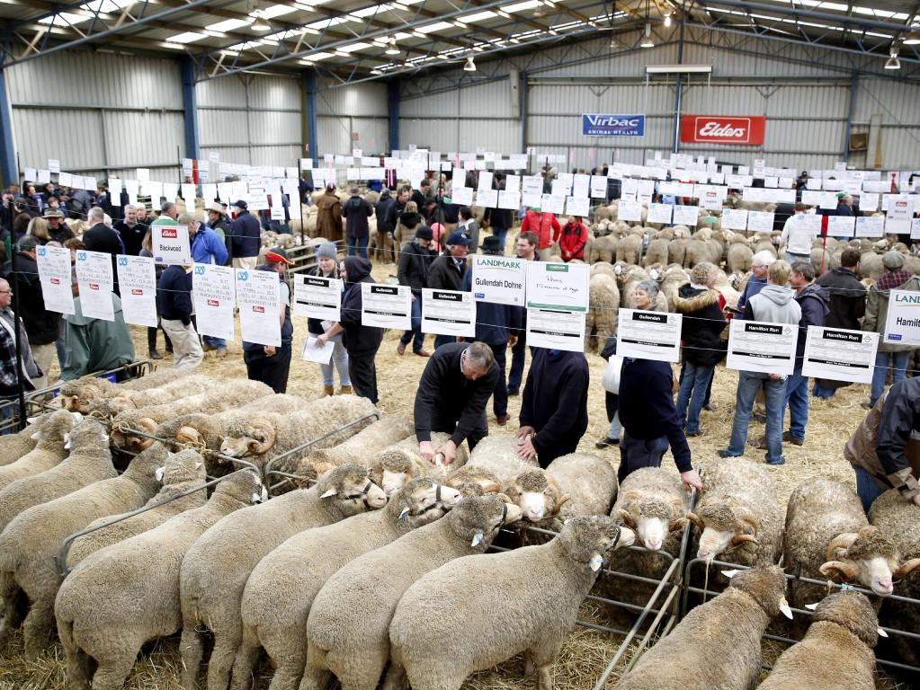Sheep on show at the Sheepvention