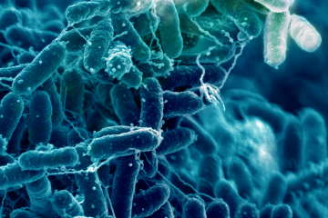 biofilm microbes