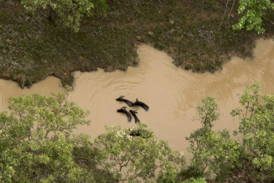 Aerial image of bodies after cull