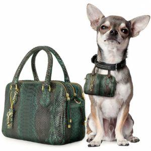 Dog with handbag