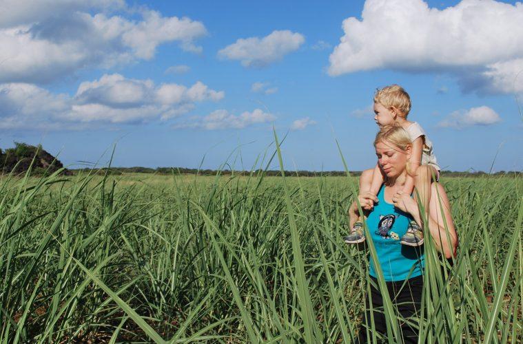 Sugar Cane Growers