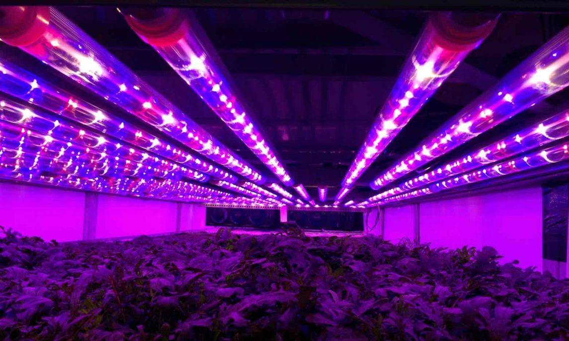 Vertical farming rows