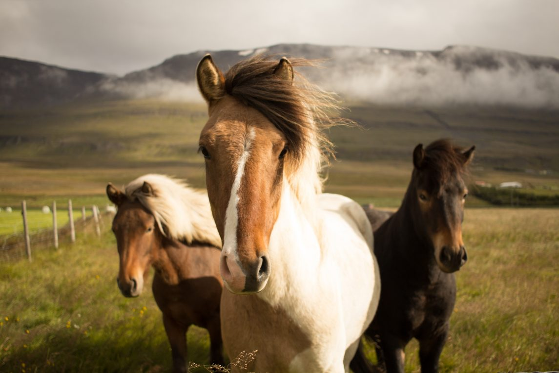 horses with attitude