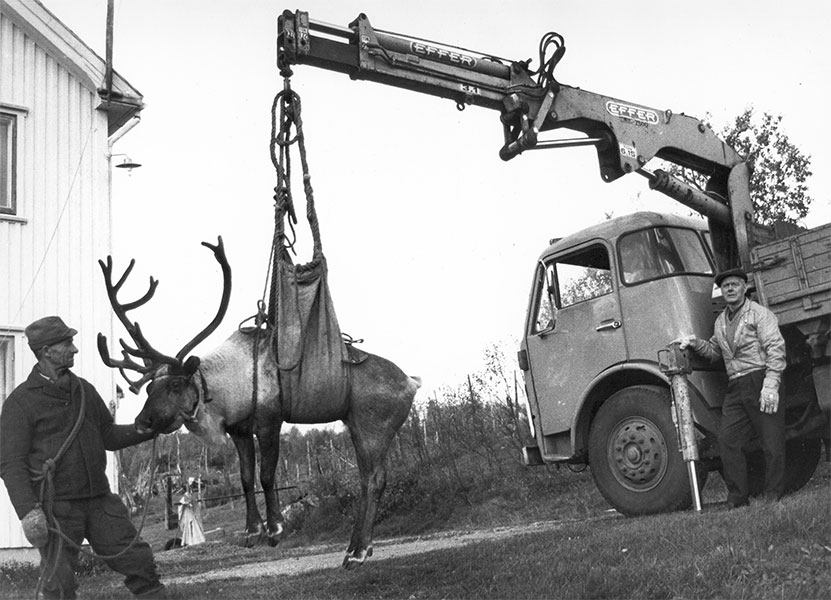 Effer cranes and raindeer